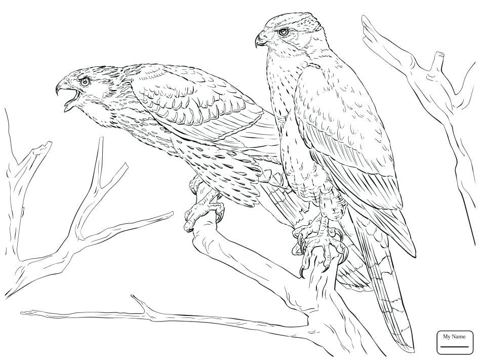 948x711 Hawk Coloring Pages Sparrow Hawk Coloring Page Tony Hawk Printable