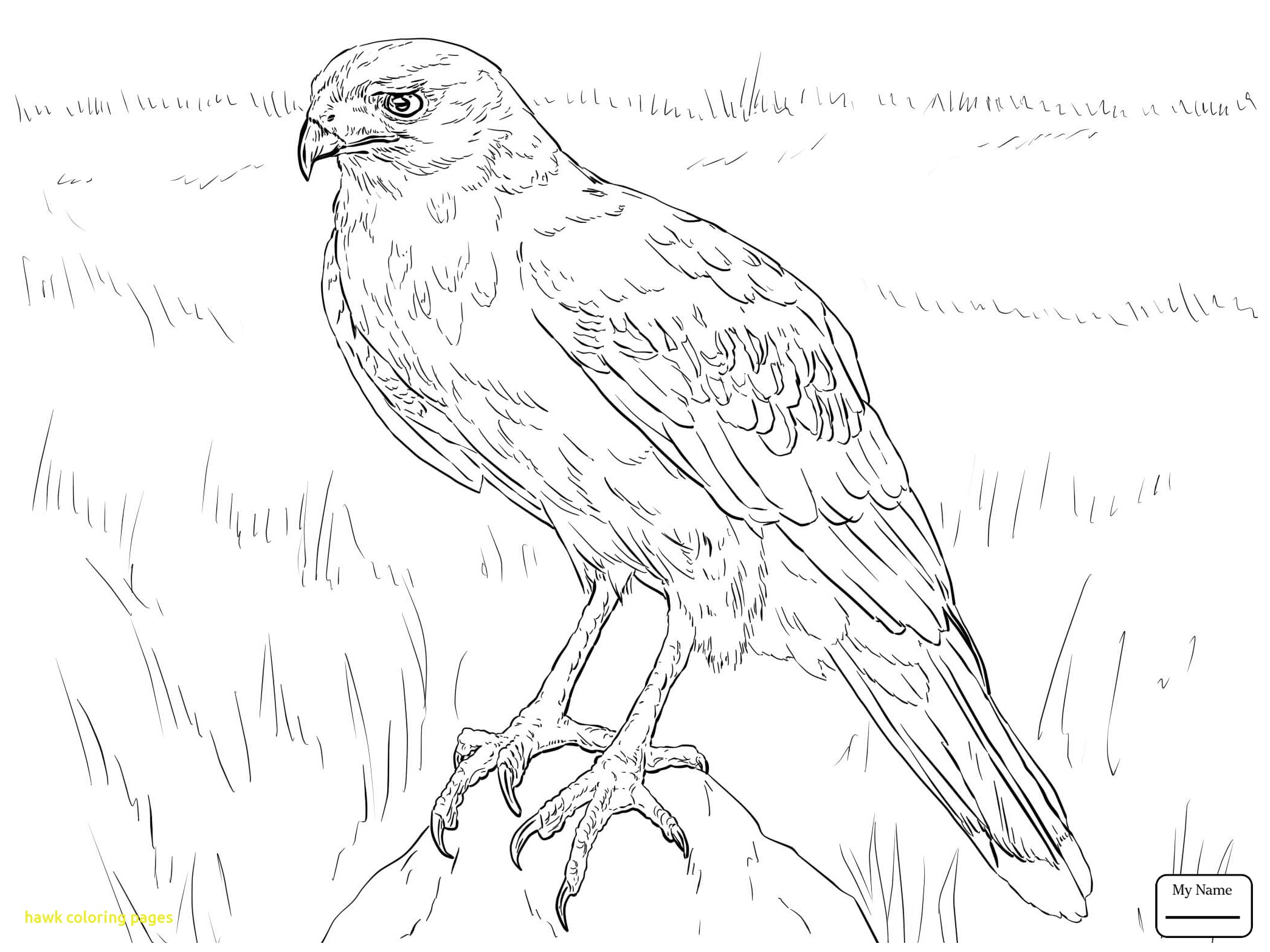 2089x1567 Hawk Coloring Pages With Hawks Birds Goshawk Coloring Pages