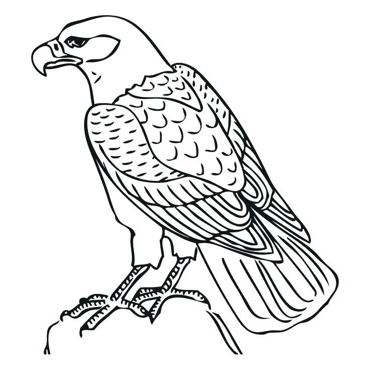 736x736 Hawk Coloring Hawk Coloring Pages Hawk Coloring Page Tony Hawk