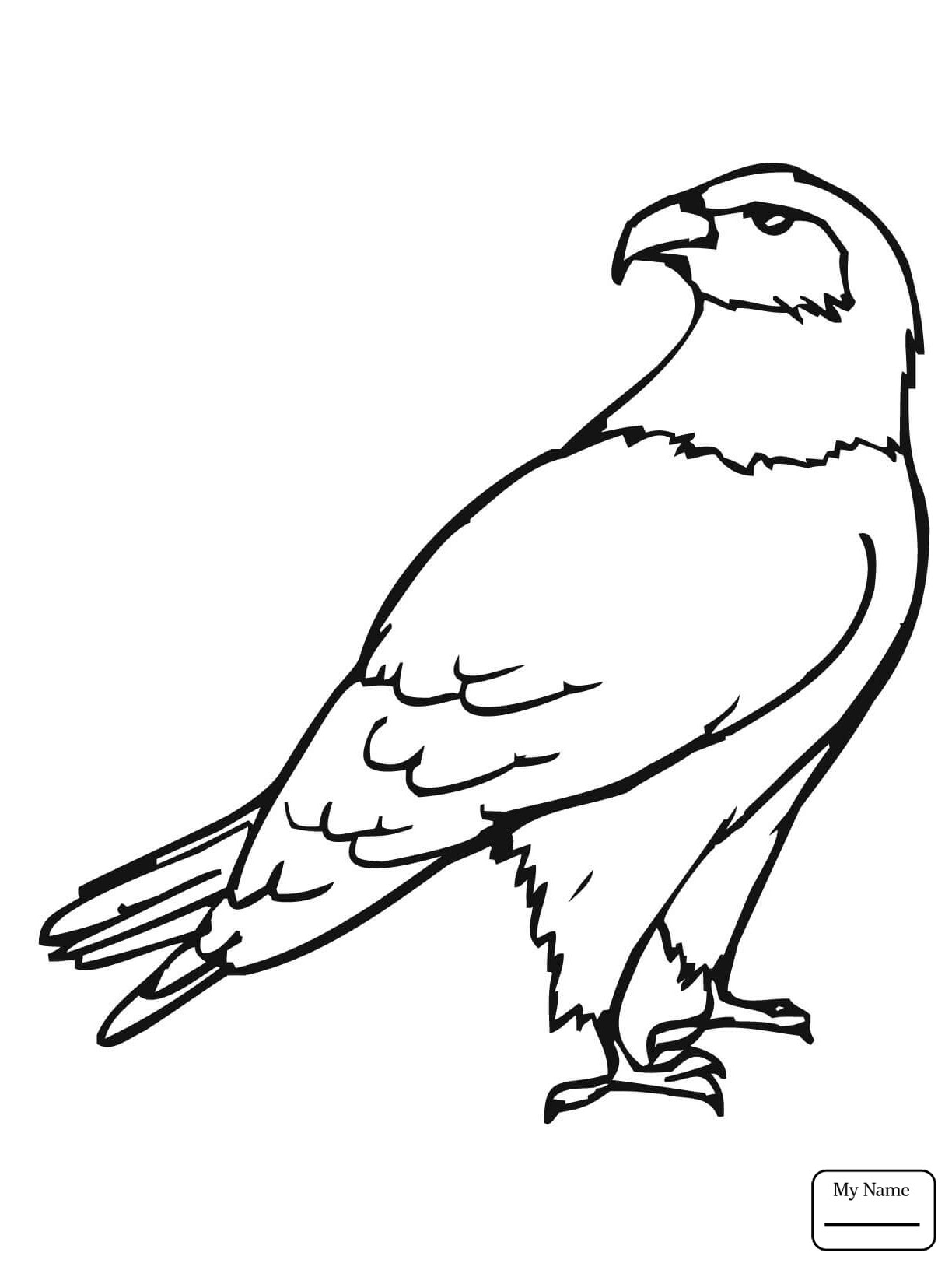 1224x1632 Hawks Coloring Pages Free Cool Hawk Page