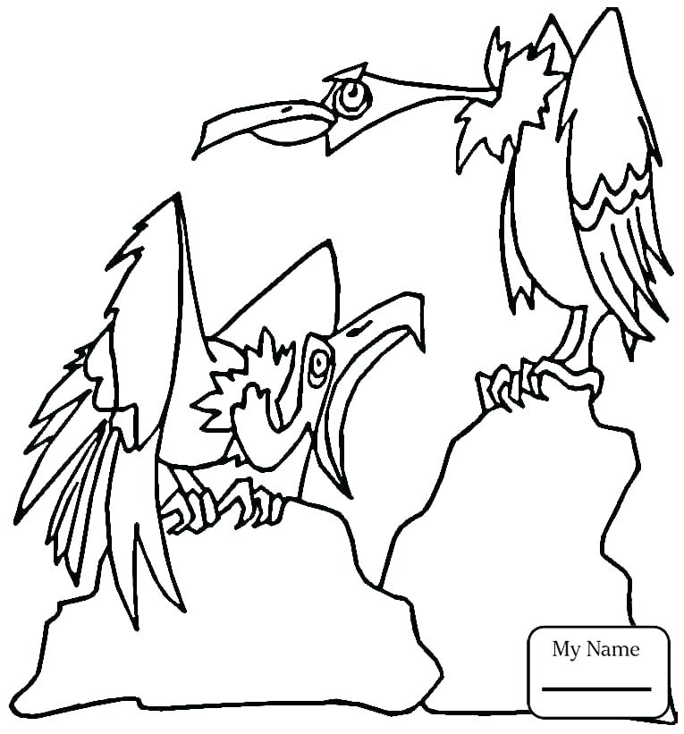 765x821 Hawk Coloring Pages