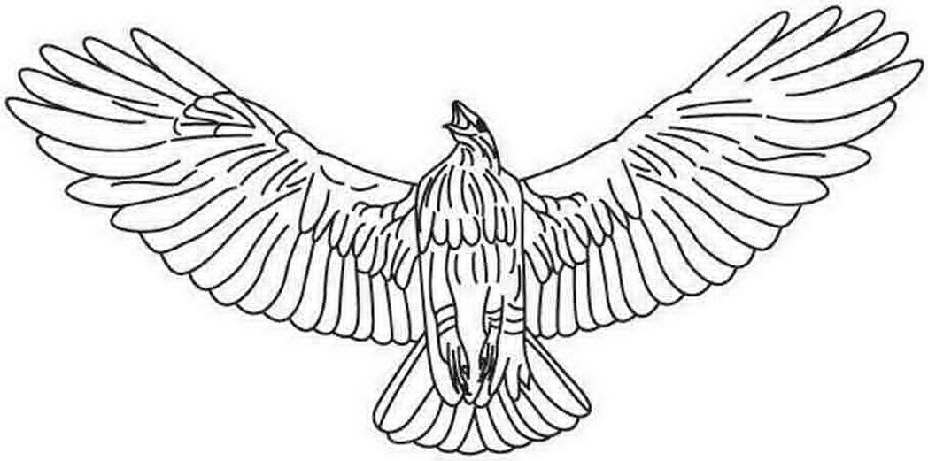 1048x521 Hawk Coloring Pages