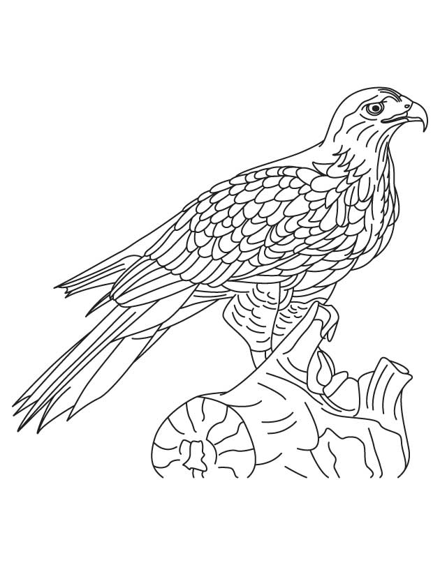 630x810 Hawk Coloring Pages