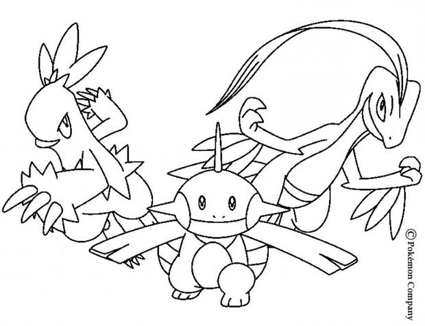 620x475 Combusken And Marshtomp Coloring Pages
