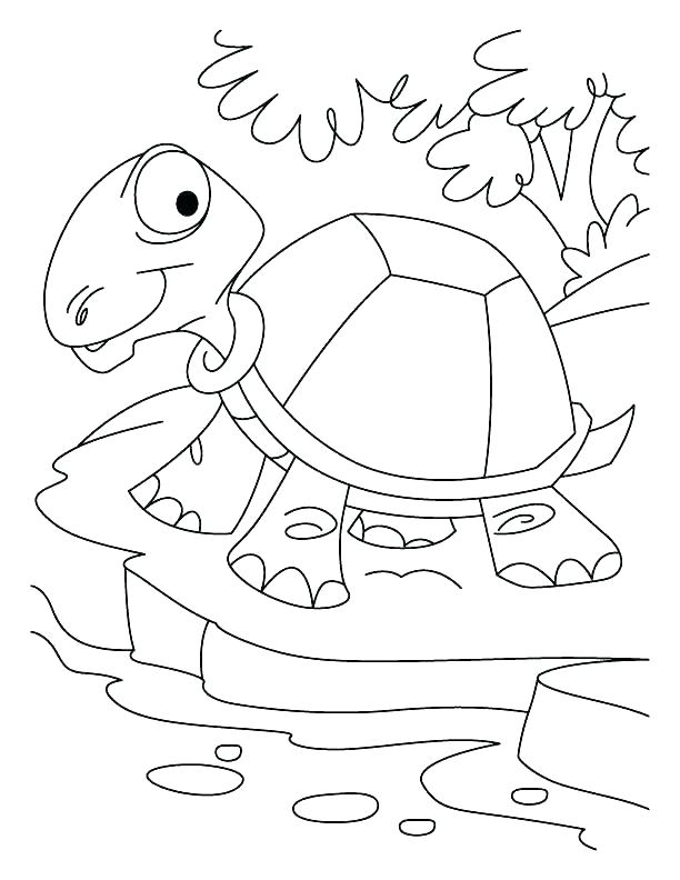 612x792 Tortoise Coloring Page Tortoise Coloring Page An Old Tortoise