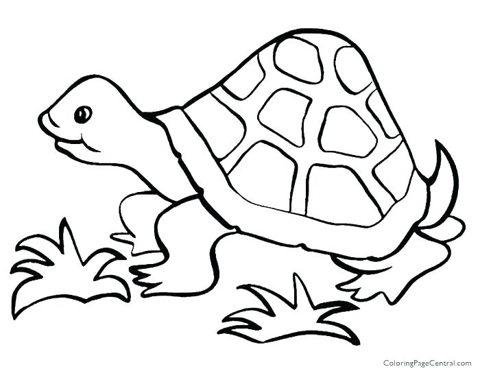 700x541 Tortoise Coloring Page Tortoise Coloring Page Free Printable