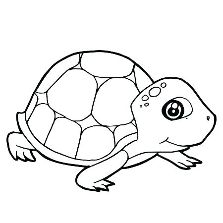 450x450 Tortoise Coloring Page Tortoise Coloring Page Tortoise Coloring
