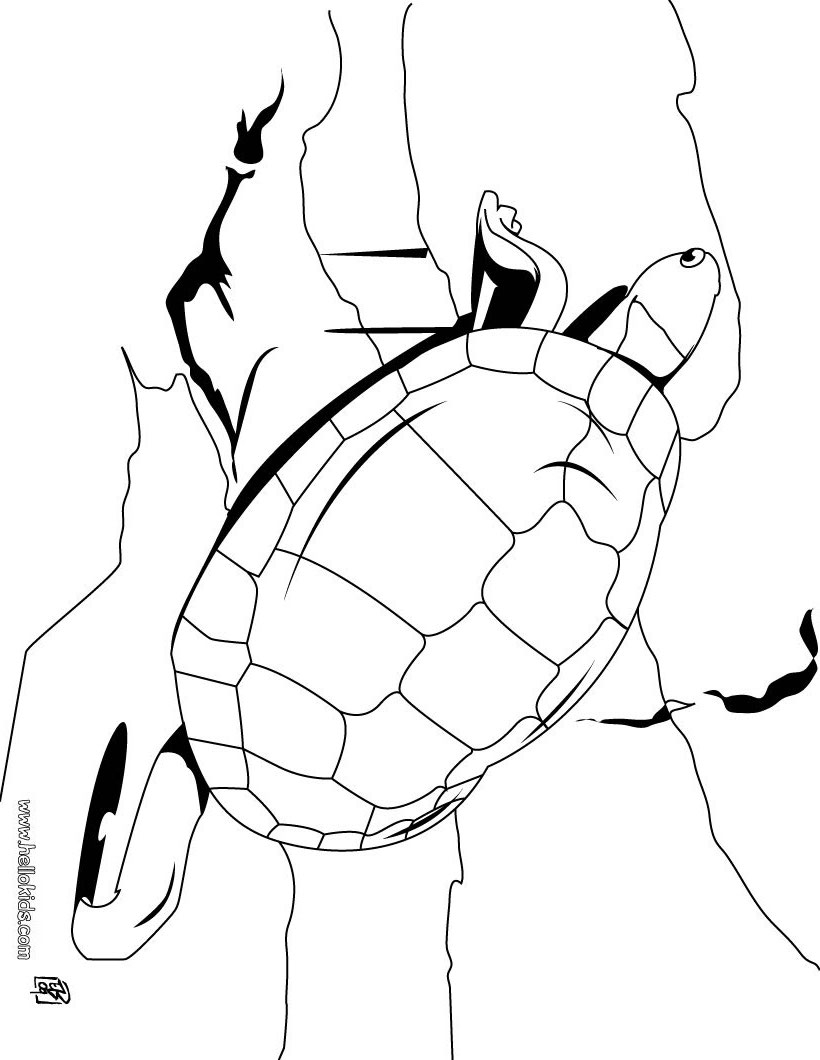 820x1060 Big Tortoise Coloring Pages