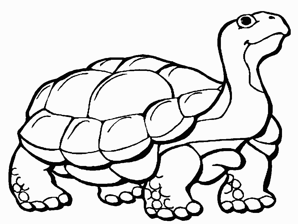 1024x768 Tortoise Coloring Page