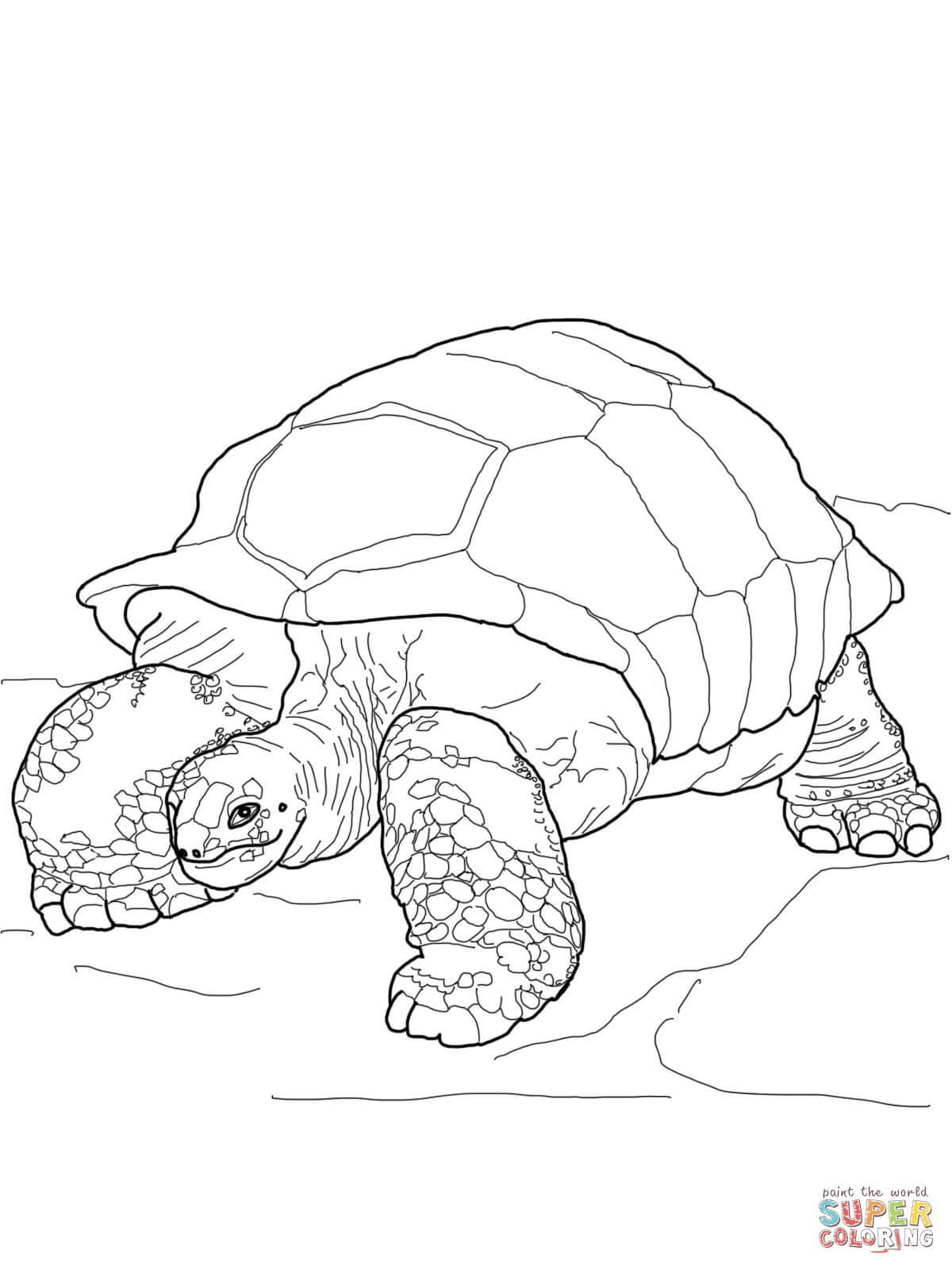 1200x1600 Tortoise Coloring Page