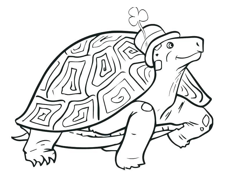 858x640 Tortoise Coloring Page Coloring Page Tortoise Desert Tortoise
