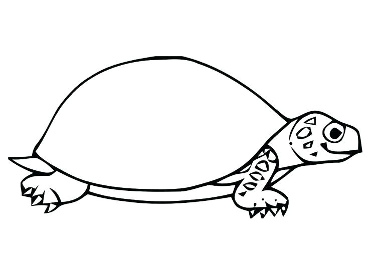 750x531 Tortoise Coloring Page Coloring Pages Turtles Ninja Big Head Small