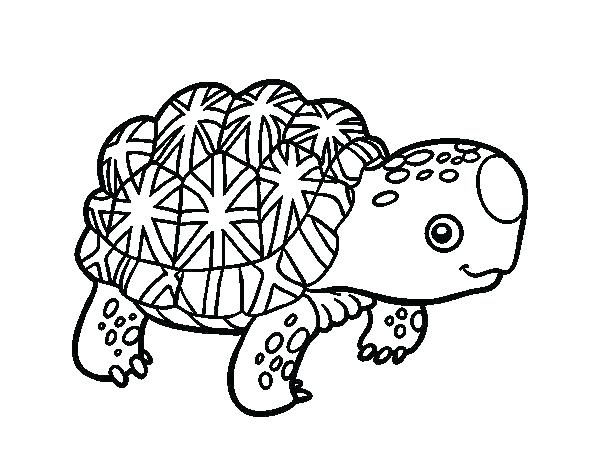 600x470 Tortoise Coloring Page Desert Tortoise Coloring Page Galapagos