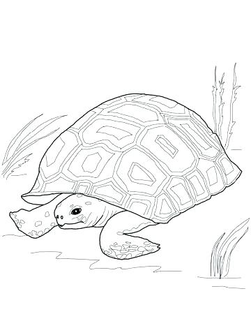 360x480 Tortoise Coloring Page Gopher Animal Coloring Pages Tortoise