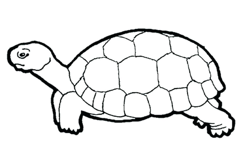 940x664 Tortoise Coloring Page Tortoise Coloring Page Tortoise