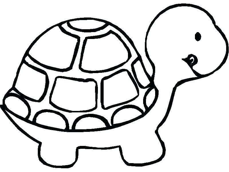 800x600 Tortoise Coloring Page Tortoise Coloring Page Tortoise Coloring