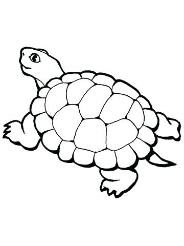 360x480 Tortoise Coloring Page Walking Tortoise Coloring Page Tortoise