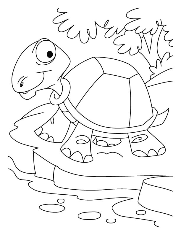 612x792 Tortoise Coloring Pages Thirsty