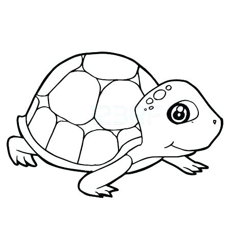 450x450 With Land Tortoise Coloring Pages Page Sometimes Called An Spurred