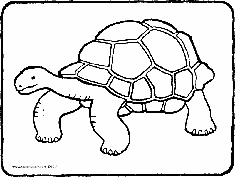 800x602 Nature Colouring Pages