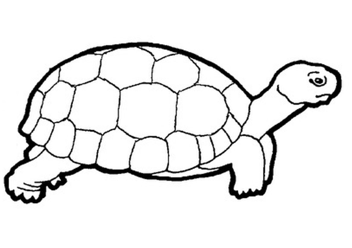 1169x826 Tortoise Coloring Pages