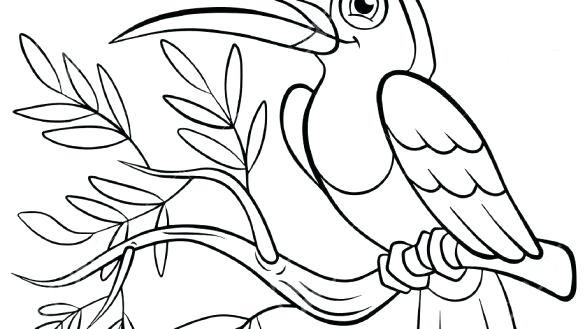 585x329 Toucan Coloring Page Toucan Coloring Page Toucan Coloring Pages