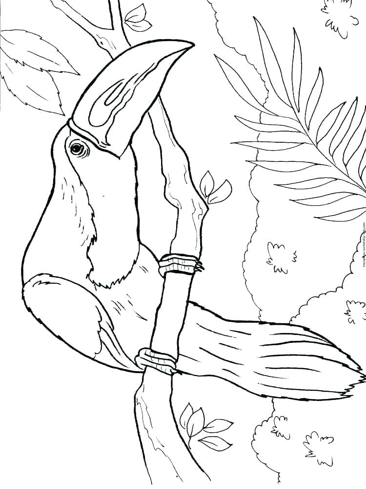 750x1000 Toucan Coloring Page Toucan Coloring Toucan Birds Coloring Pages