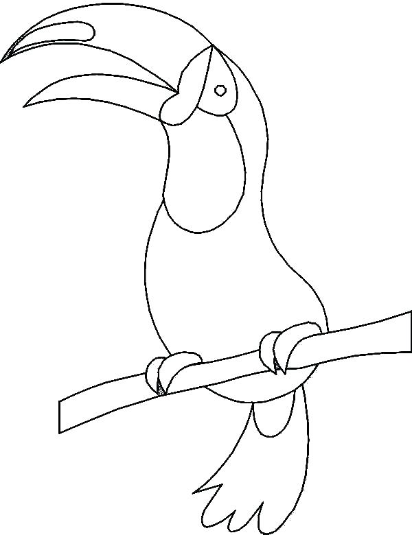 600x780 Toucan Coloring Pages To Print Toucan Bird Coloring Pages