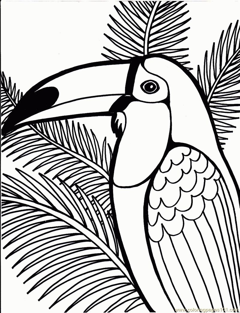 800x1042 Toucan Coloring Page