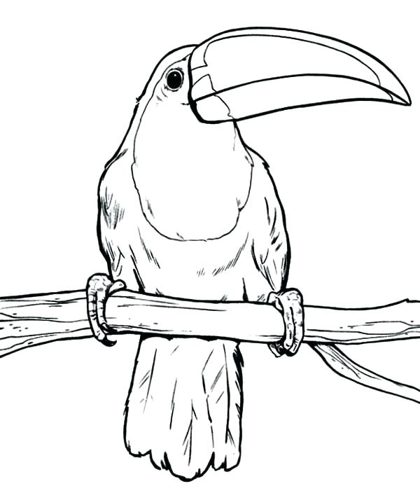600x691 Toucan Coloring Page Free Printable Toucan Coloring Pages Awesome