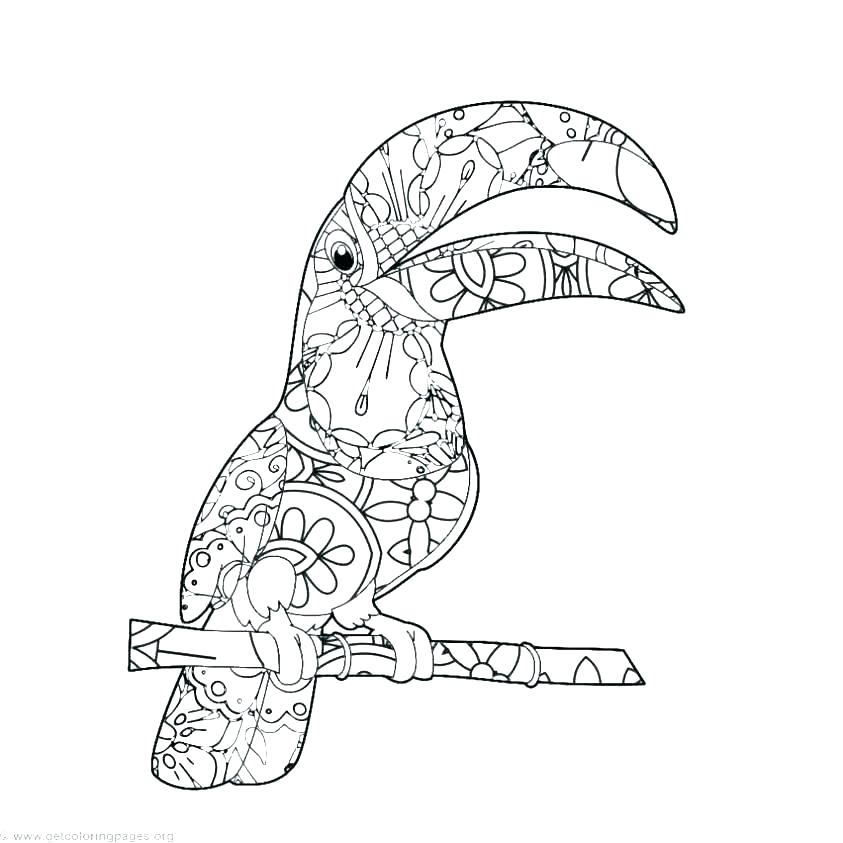 843x843 Toucan Coloring Page Keel Billed Toucan Coloring Page