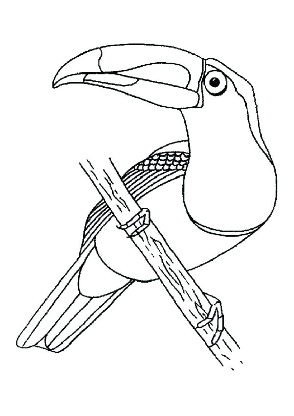600x849 Toucan Coloring Page T Is For Toucan Colouring Page Toucan Sam