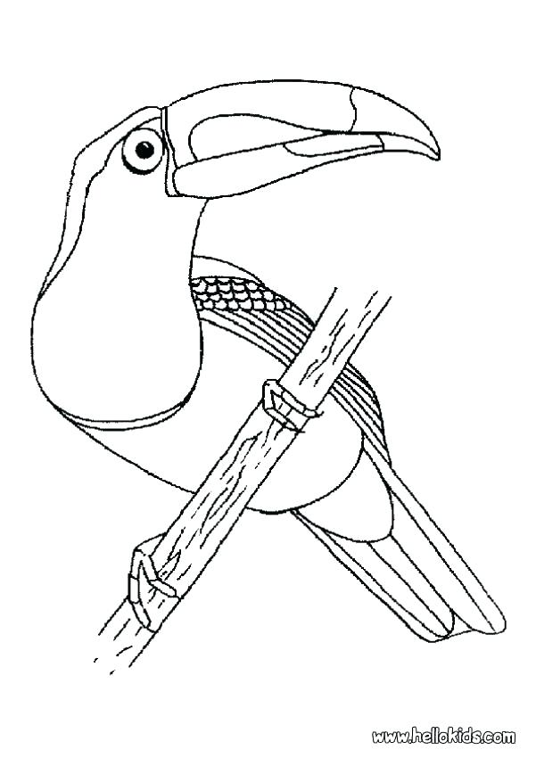 601x850 Toucan Coloring Page Toucan Pictures To Color Toucan Coloring Page