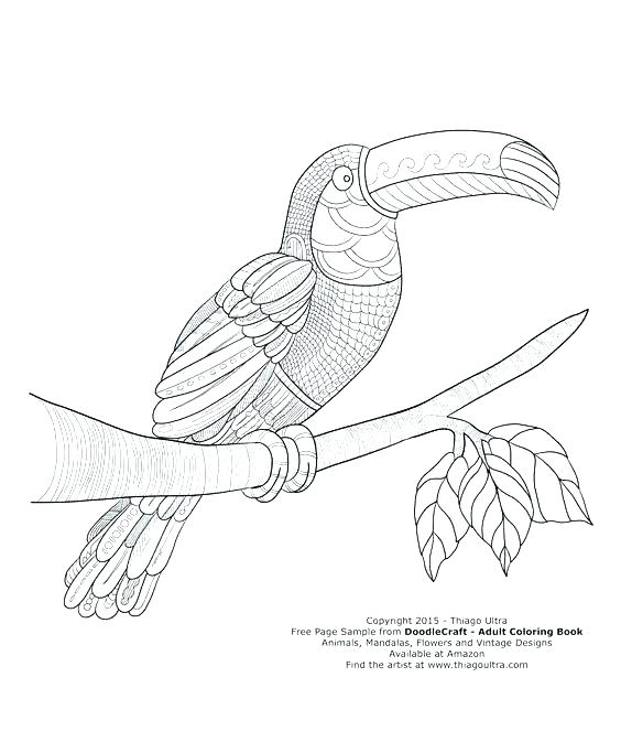 564x663 Toucan Coloring Page Toucan Ring Pages Free Page Adult Book Books