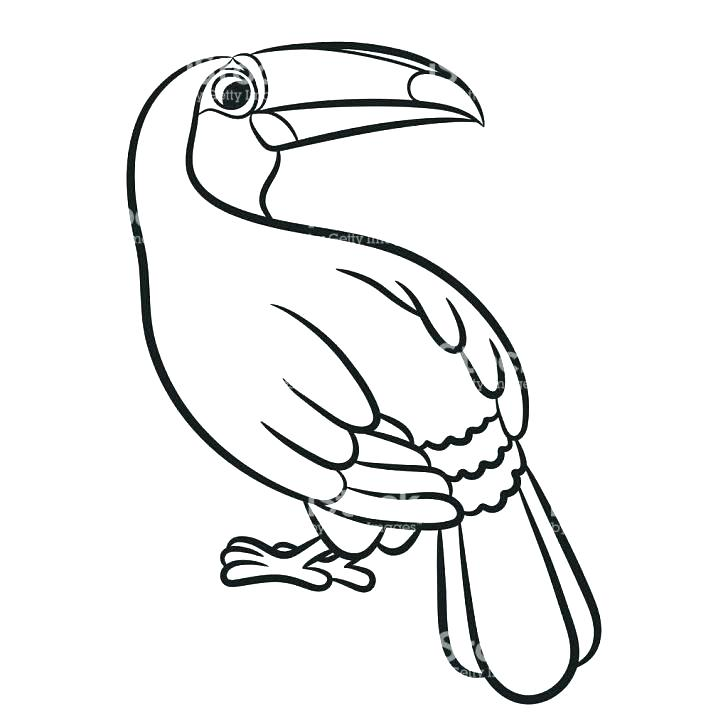 728x728 Toucan Coloring Page Uni Toucan Toco Toucan Coloring Pages