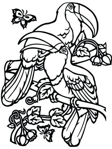 360x480 Toucan Coloring Page