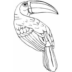 300x300 Toucan Coloring Page