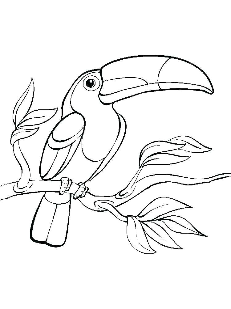 750x1000 Toucan Coloring Pages Best Toucan Coloring Page For Your Coloring