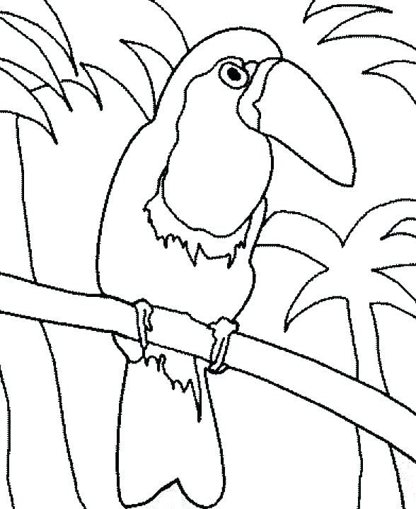 588x720 Toucan Coloring Pages Coloring Pages Cartoon Toucan Coloring Pages