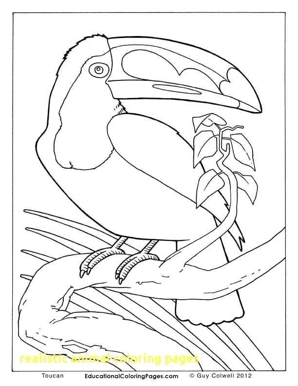 612x792 Toucan Coloring Pages Download Large Image Toucan Coloring Page