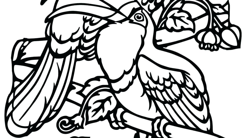 960x544 Toucan Coloring Pages Toucan Coloring Page Sloth Coloring Pages
