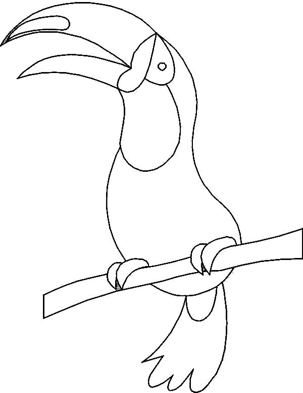 600x780 Toucan Coloring Pages Toucan Coloring Pages How To Draw A Toucan