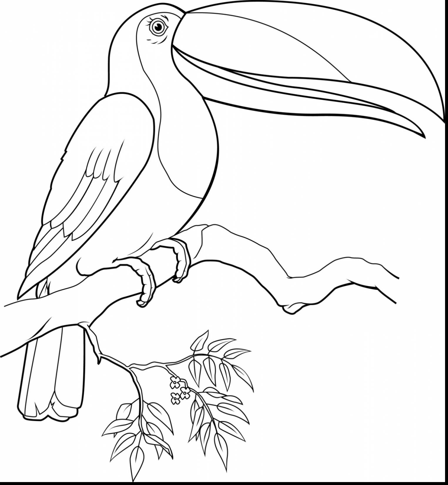 1525x1650 Toucan Sam Coloring Pages Download