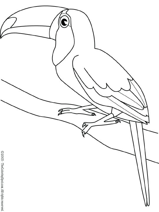 540x720 Toucan With Toucan Toucan Coloring Pages To Print