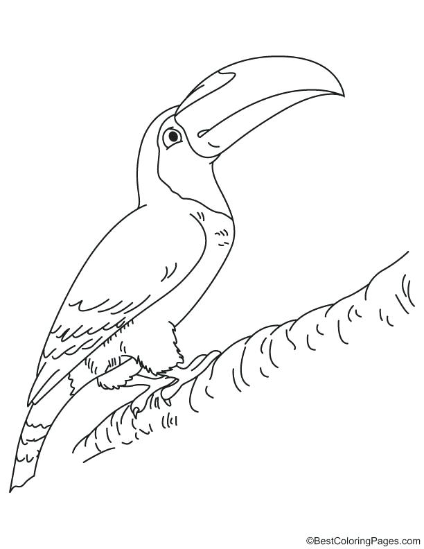 612x792 Coloring Toucan Coloring Page Images Pages Keel Billed Toucan