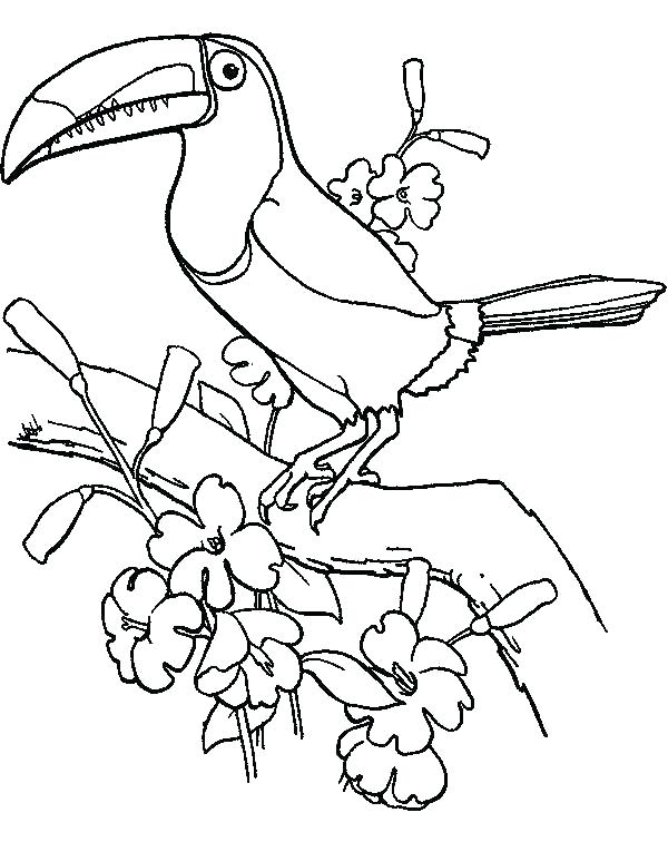 600x756 Bird Colouring Pages Printable Toucan Coloring Page