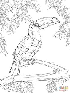 236x314 Free Rainforest Coloring Pages Toucan Coloring Picture Sheets