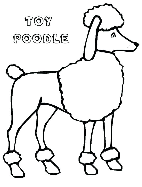 600x788 Poodle Coloring Page A Tall Type Toy Poodle In Action Coloring