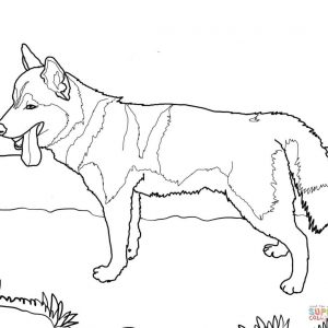 300x300 Toy Poodle Coloring Page Printable Pages Siberian Husky Dog Page Adult