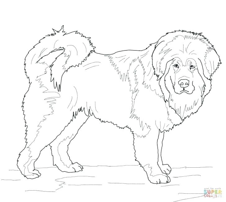 728x653 French Poodle Coloring Page Coloring Page Poodle Puppy Coloring